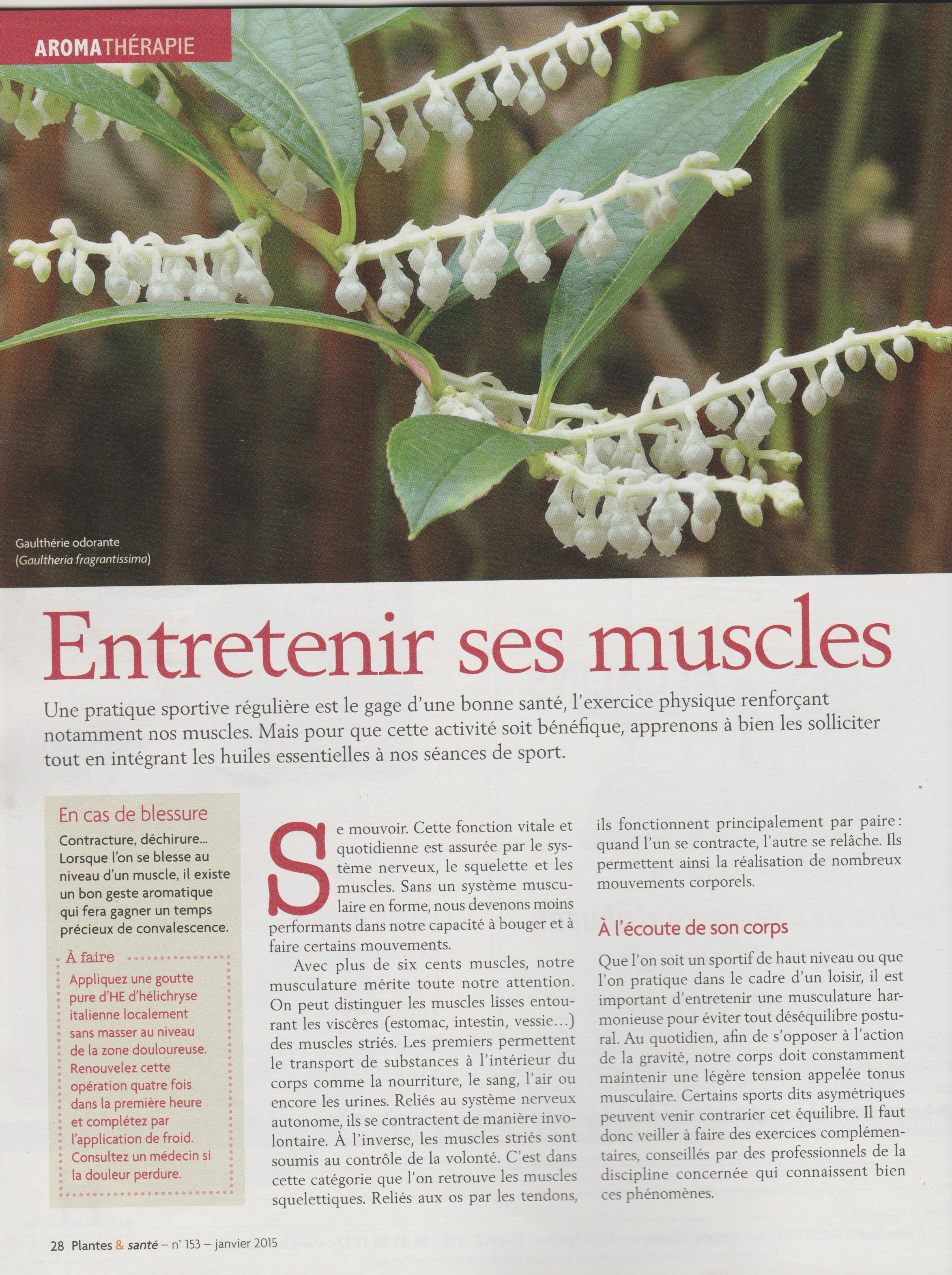 article muscles 1