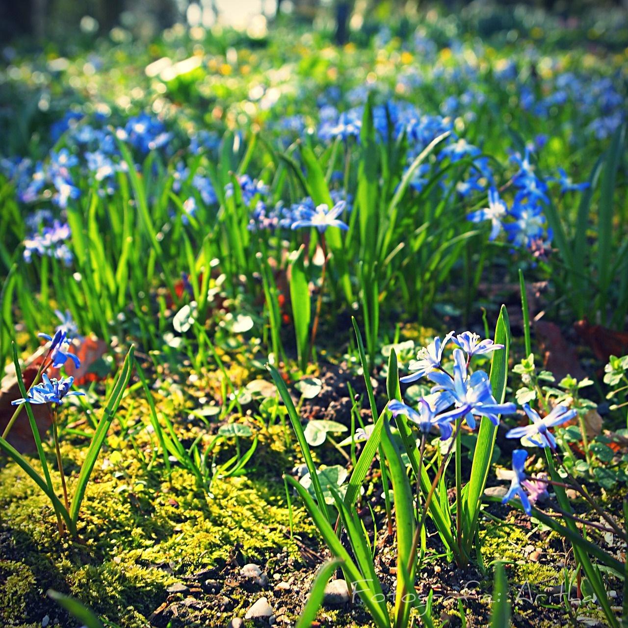 printemps stage