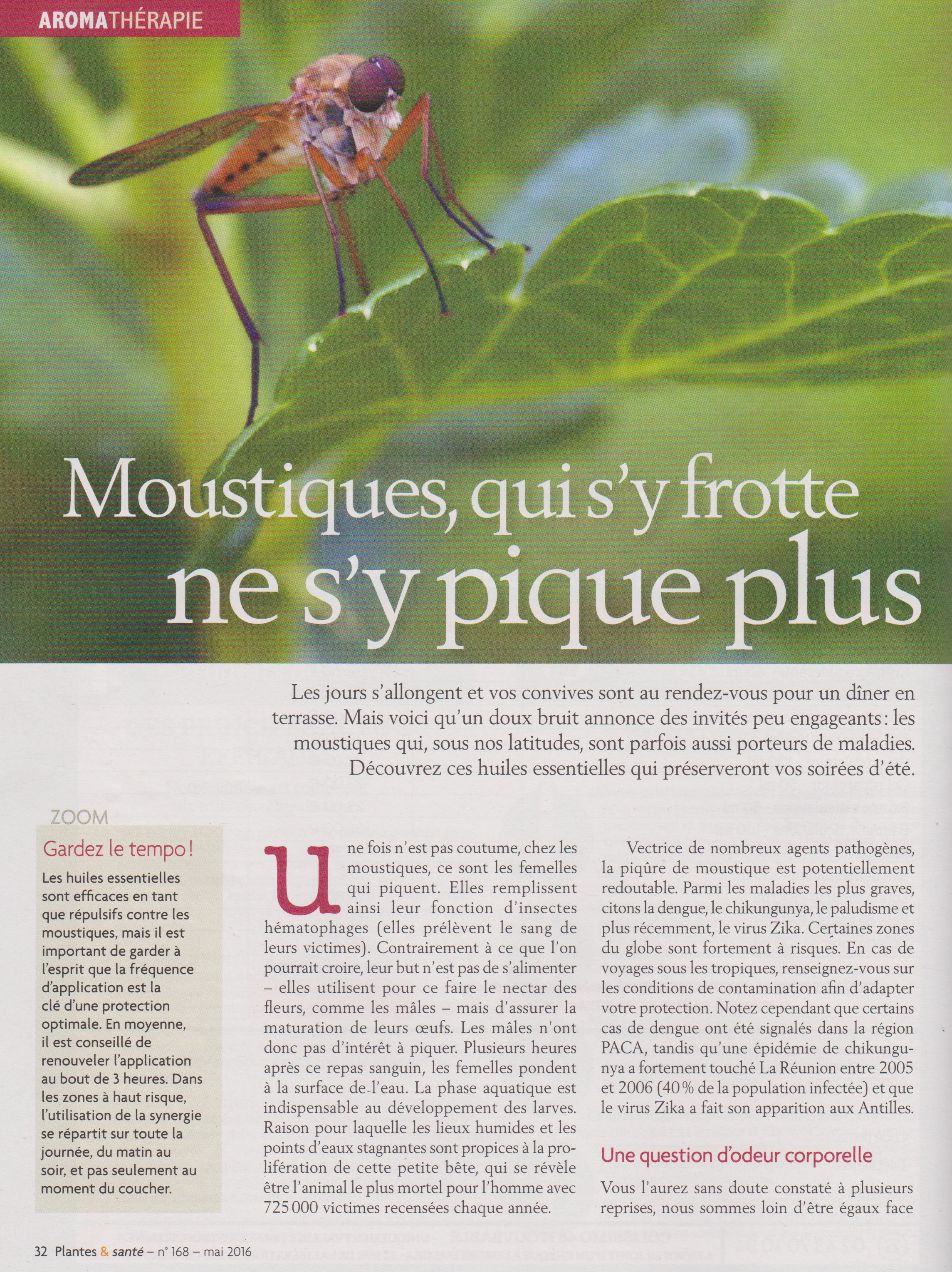 article moustique 1