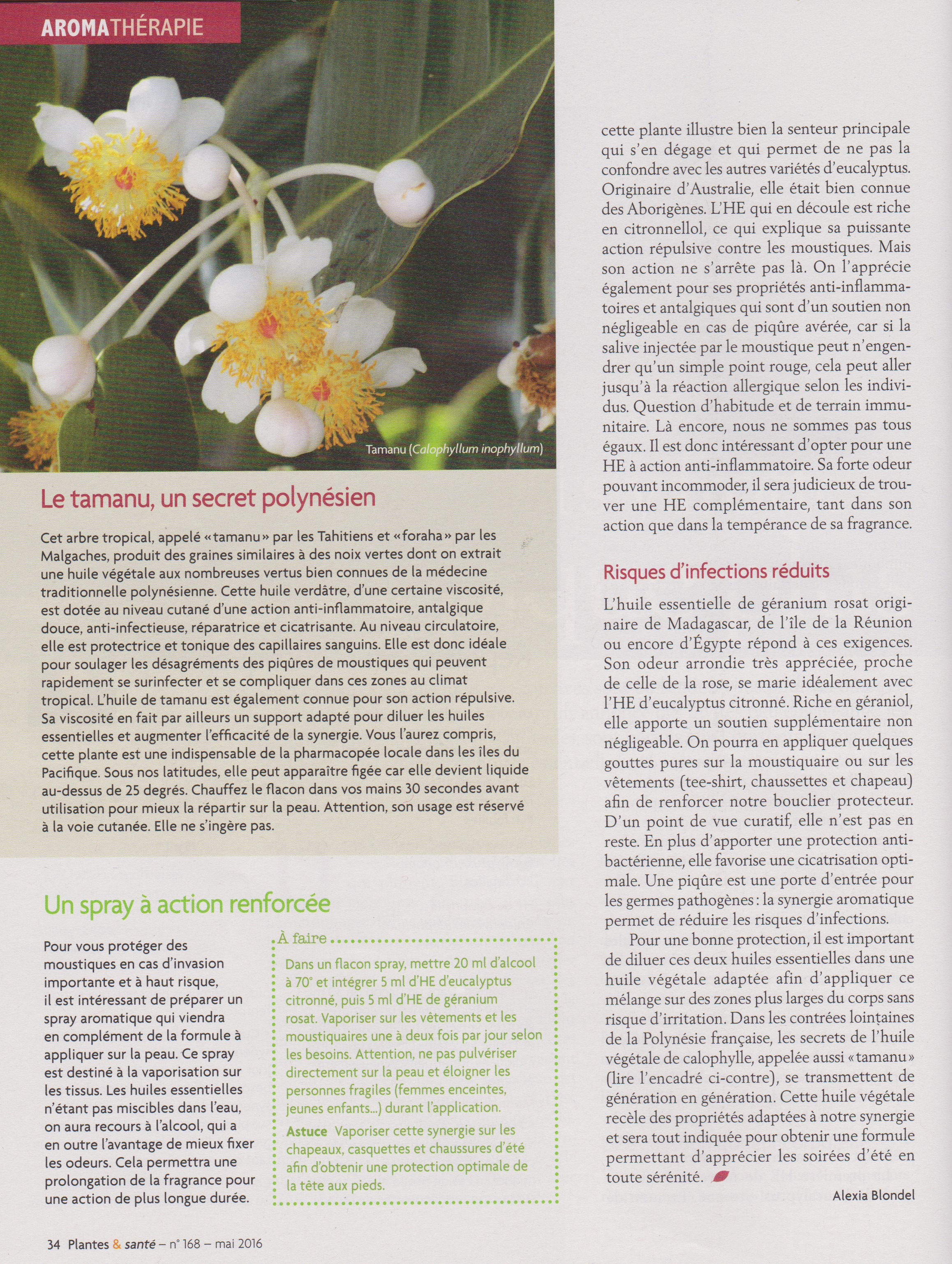article moustique 3